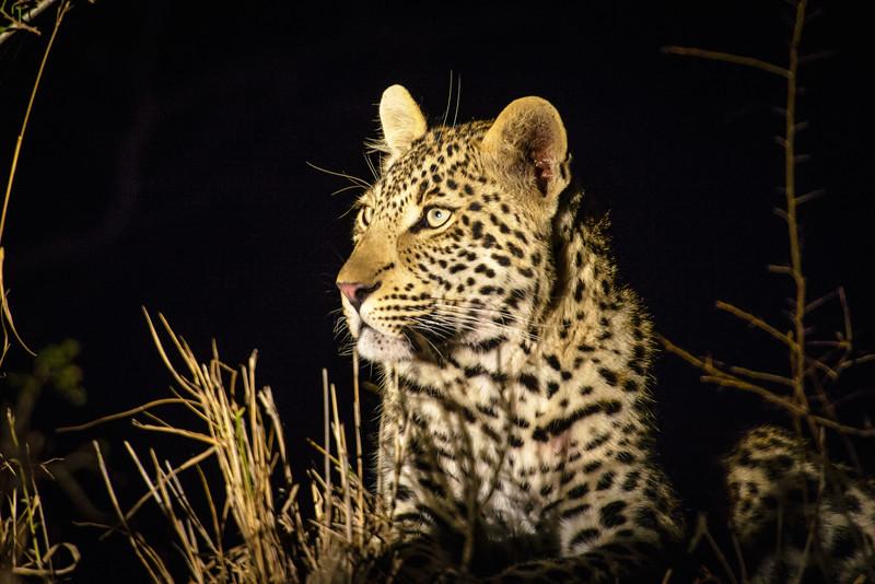 Zuid Afrika 2015 250.jpg