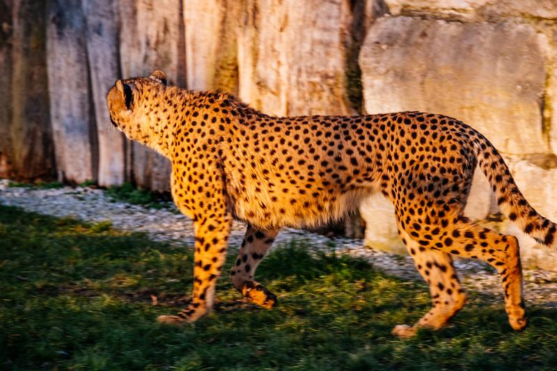 Tonis Zoo-0357.jpg