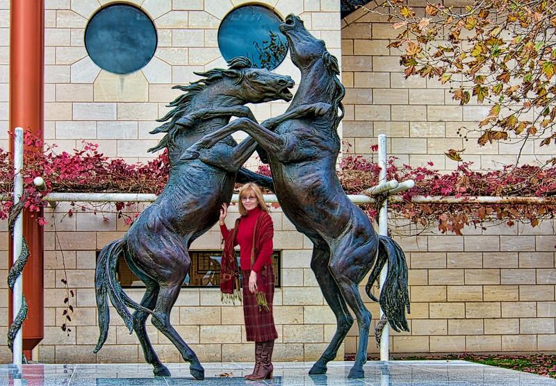 Rymill Horses