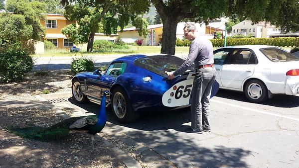 Brock Daytona Coupe