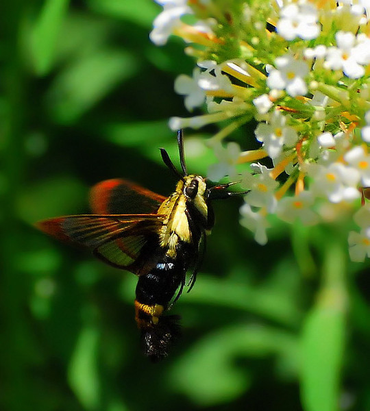 Butterflies 08-02-2008 61.JPG