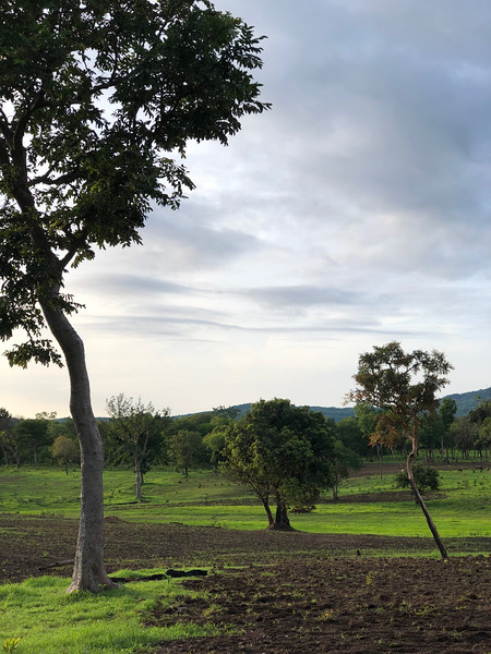 Guinea-118.jpg