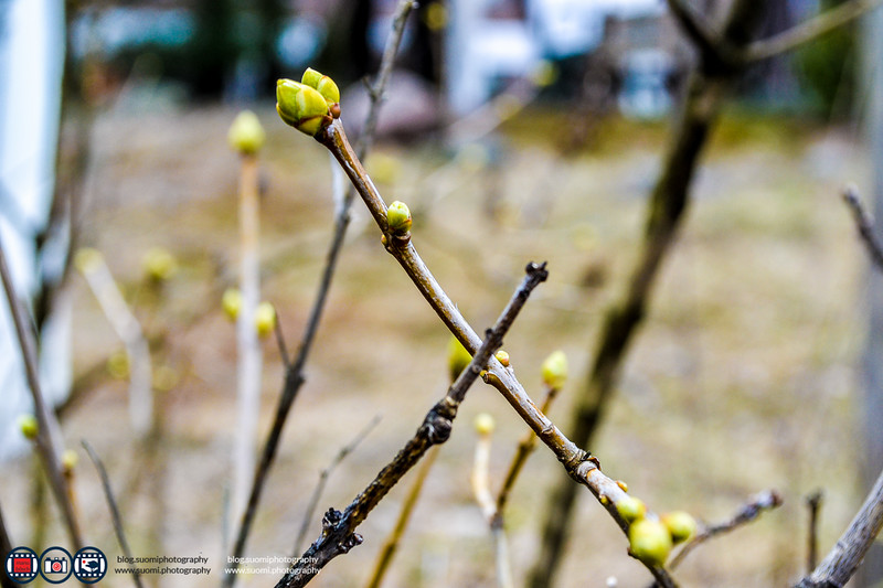 Suomiphotography_005.jpg