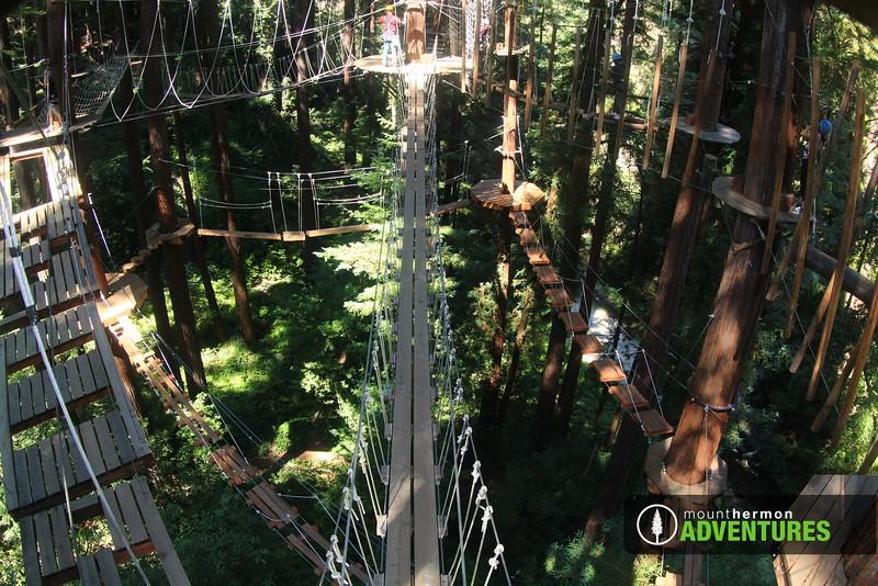 sequoiaportrait_1473446821367.jpg