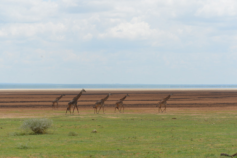 East Africa Safari 461.jpg