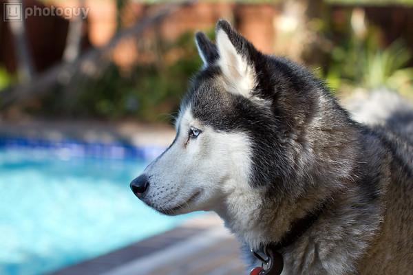 0001-Sierra Dog