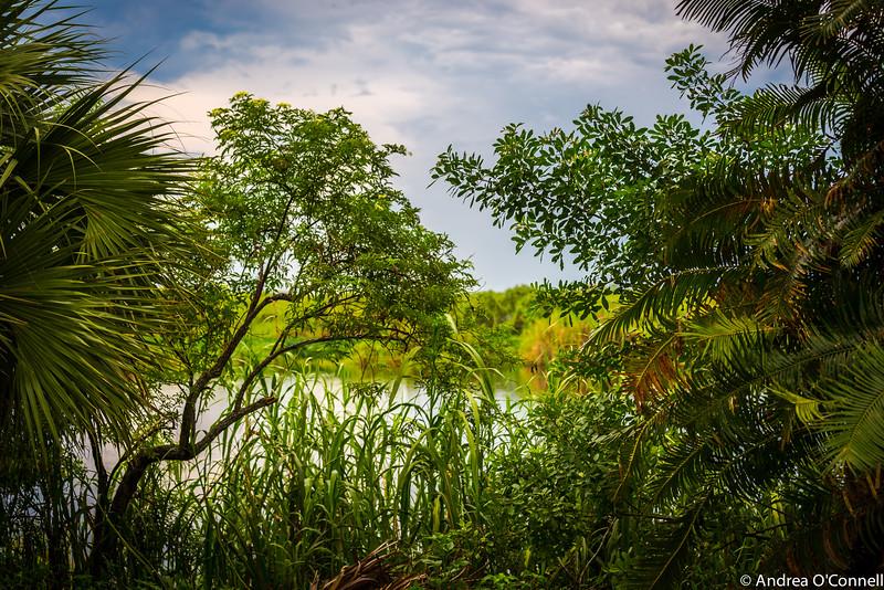 River of Grass3.jpg