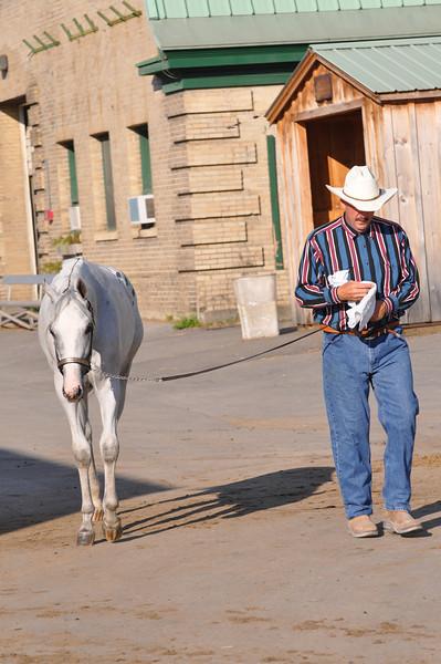 Naa Horse Show
