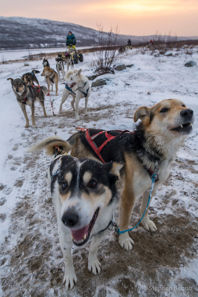 Dog Mushing-9852.jpg