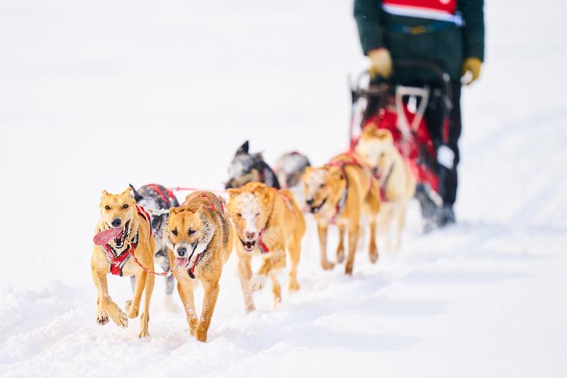 404    RobertEvansImagery.com IG @RobertEvansImagery   Klondike Dog Sled Race 2-9-2020.JPG