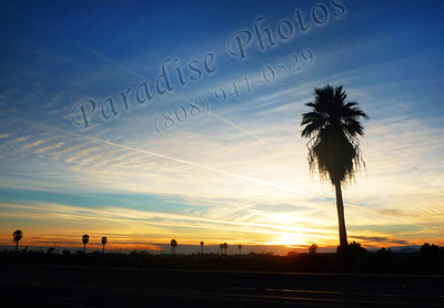 AZ sunsets skies palms