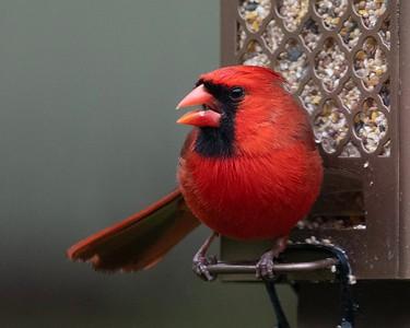 05-08-2019-birds