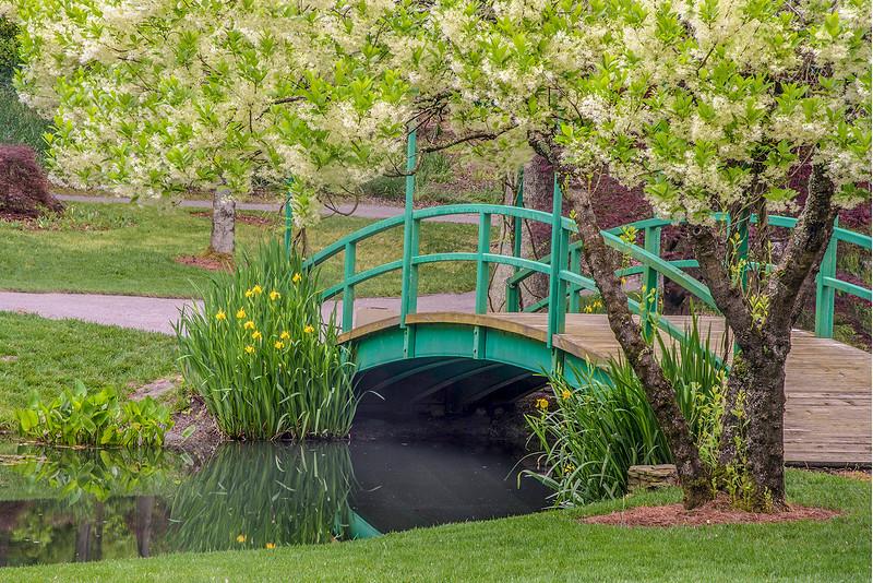 Flo-Tree-Bridge-REV-4-6-2020-10.jpg