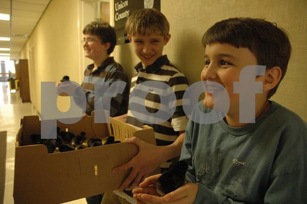 4-H Kids Adopt Chickens - March 2009