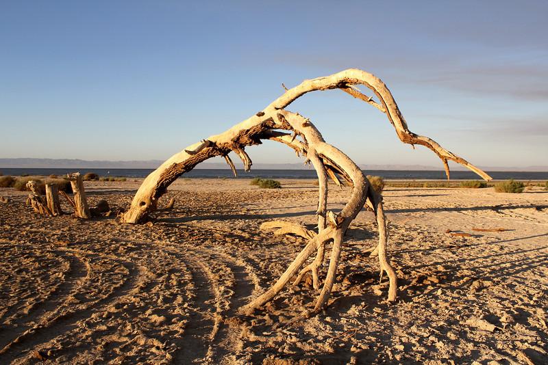 04 The Salton sea.JPG