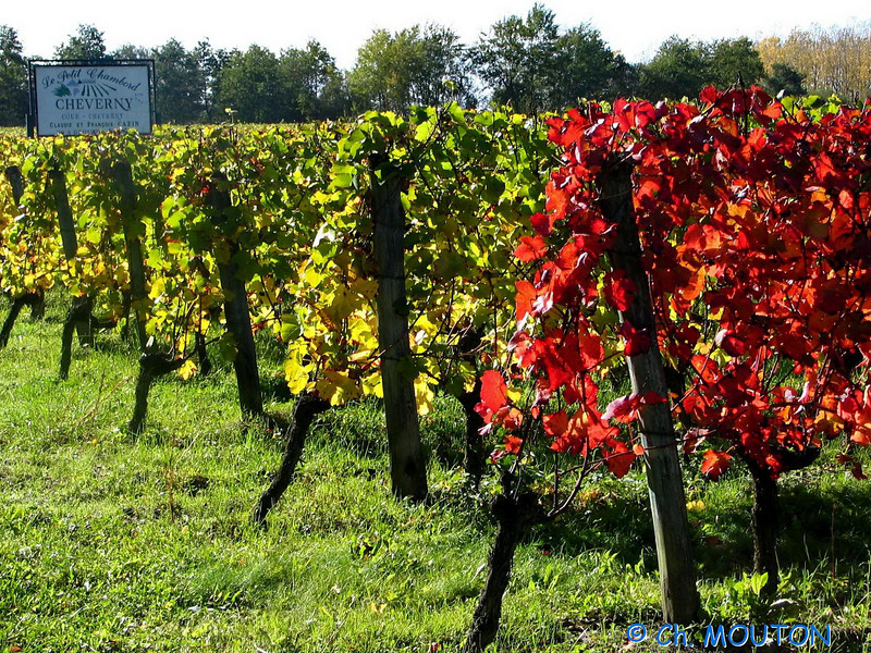 Vignoble Cheverny 04 C-Mouton.jpg