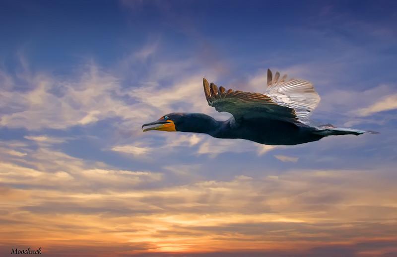 Anhingha Flyby