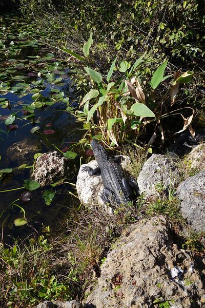 Everglades NP - 24.jpg