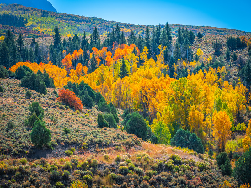 Kebler Pass Autumn Alcove:  Colorado Fall Colors Fine Art Landscape Nature Photography Fuji GFX100  Elliot McGucken Fine Art Landscape Nature Photography Prints & Wall Art