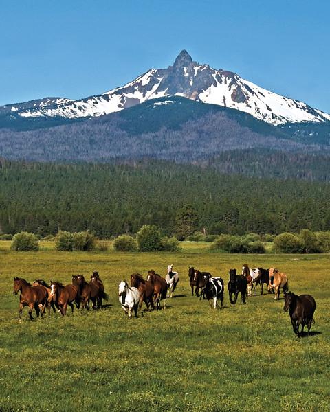 Horses running - on their way to work  Mt Washington Kate Thomas Keown_DSC6041SWOP3.jpg