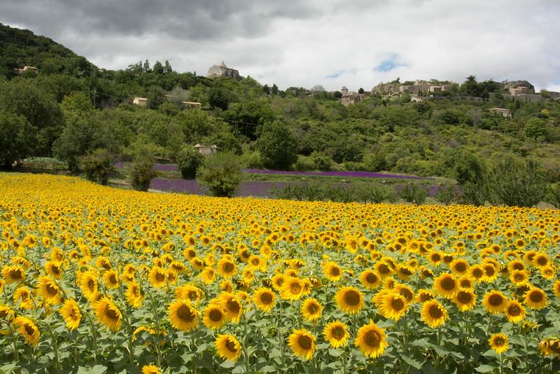 FranceSaignonSunflowers&lavendarDSC_2929.jpg