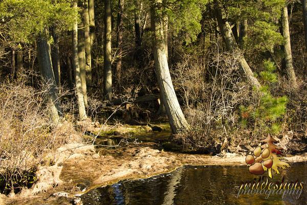 Creekside Shilohs