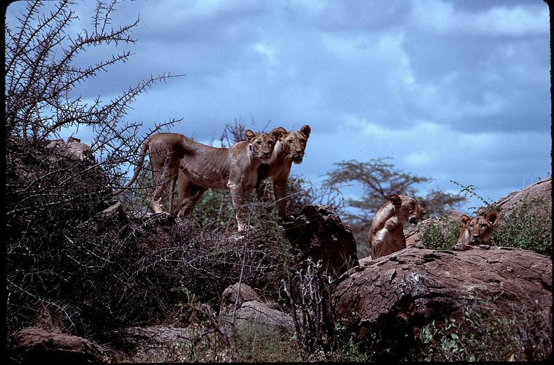 Kenya1_115.jpg
