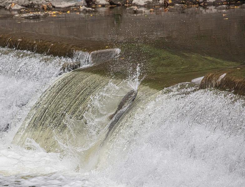 salmon upstream (15 of 48).jpg