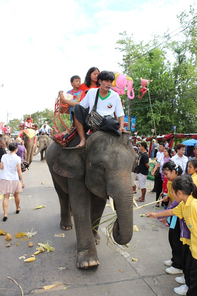 2014-11-14 Surin Elephant Welcome Feast 449.JPG