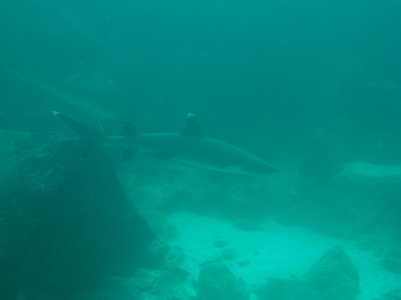 Diving in the Galapagos (138 of 392)