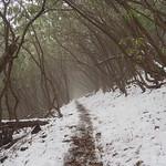 Day 11: Albert Mountain