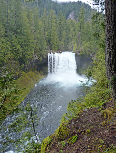 Koosah Falls on the McKenzie River in Oregon