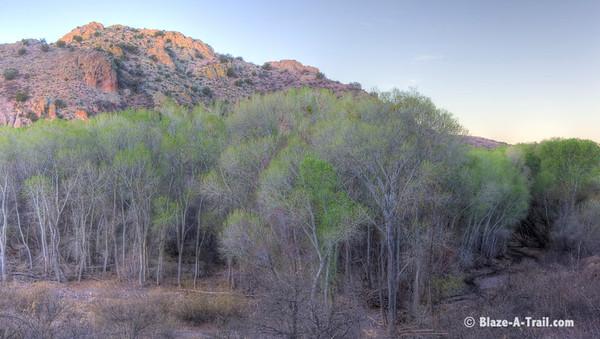 Muleshoe Ranch (Willcox, AZ)