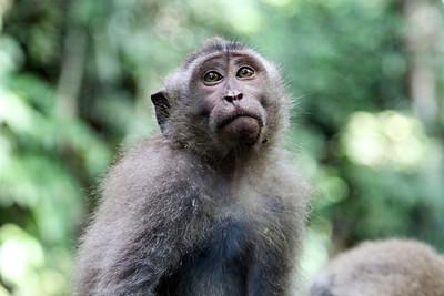 Bali - Monkey Forest
