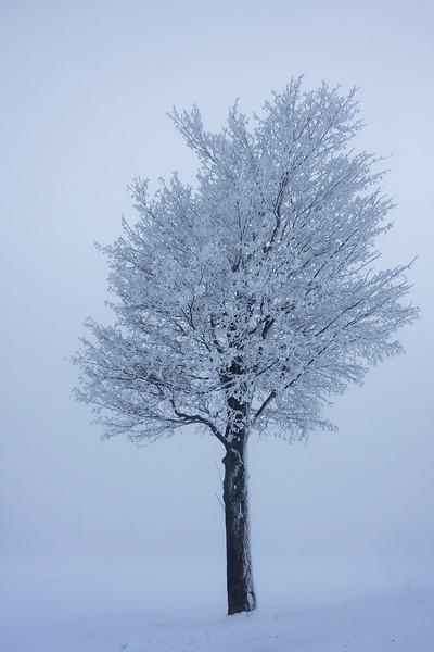 tree 14 .jpg