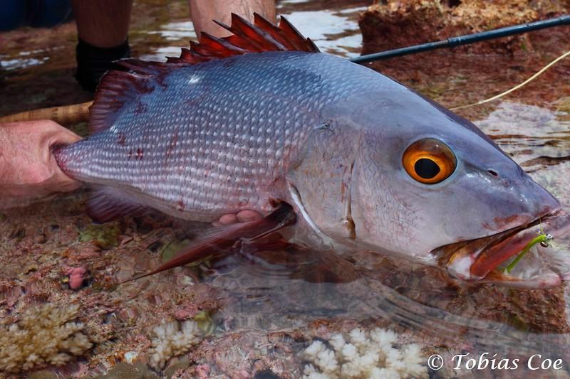 Tahiti (Anaa) (43).JPG