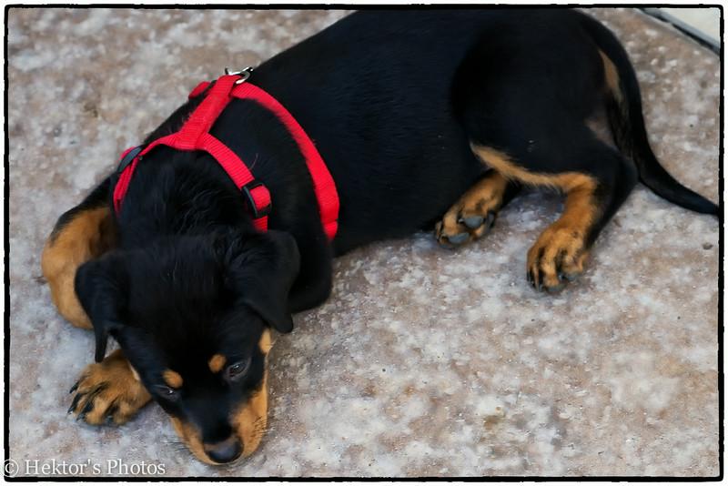 Bella-Cleo-Zoe-11.jpg
