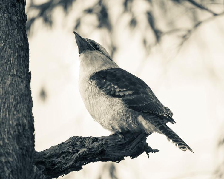 010419   birds  _1.JPG