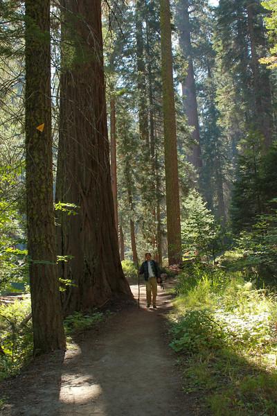 Sequoia* hking in.jpg