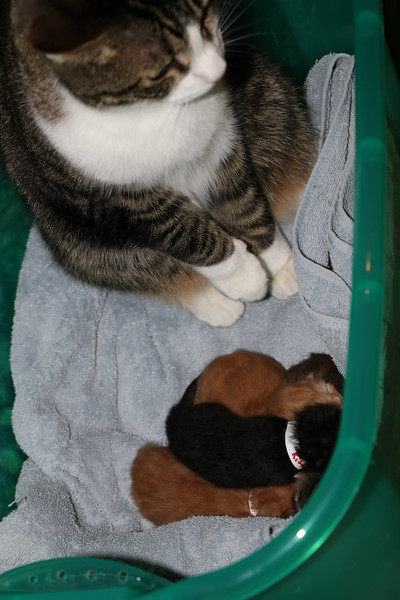 Trapping Mom and Kittens - 040115 - 10.JPG