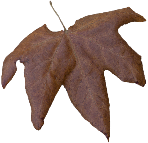 Leaf 17.png