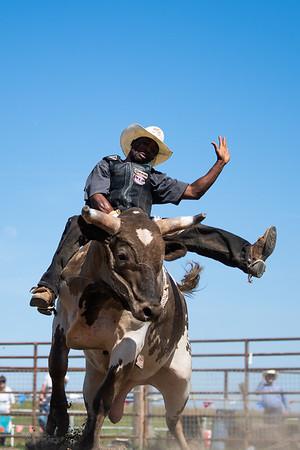 Rodeo - Rough Stock