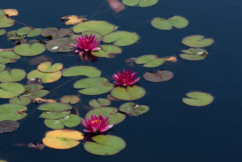 2009 06 30_NY Botanical Gardens_0720.jpg