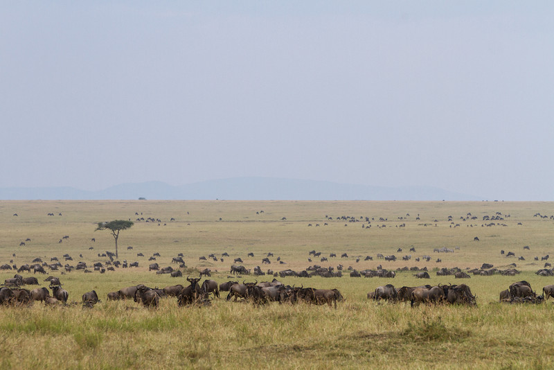 2013-Kenya2013-0722-0519.jpg