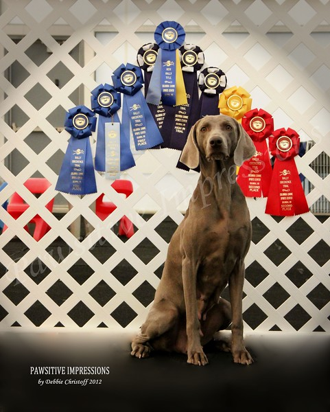 Dog Portrait, Awards, Pets