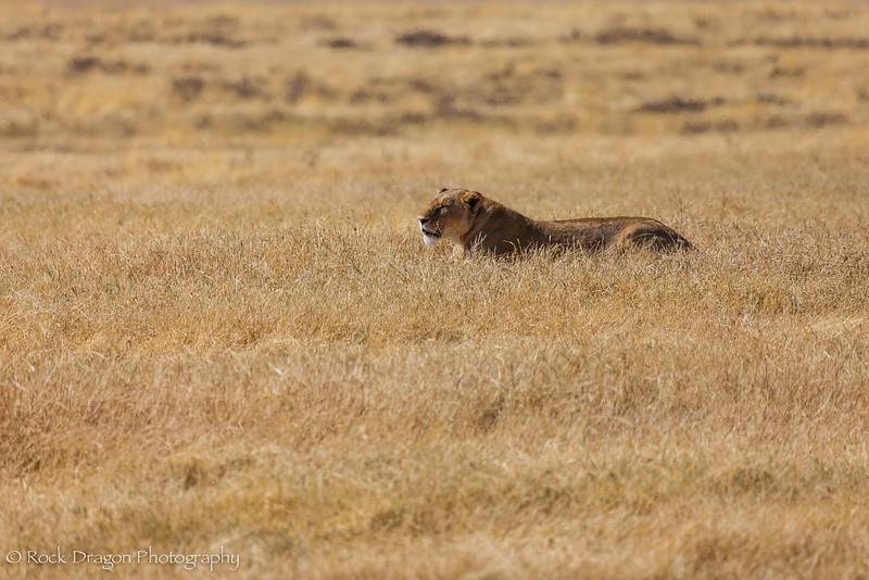 Ngorongoro-12.jpg