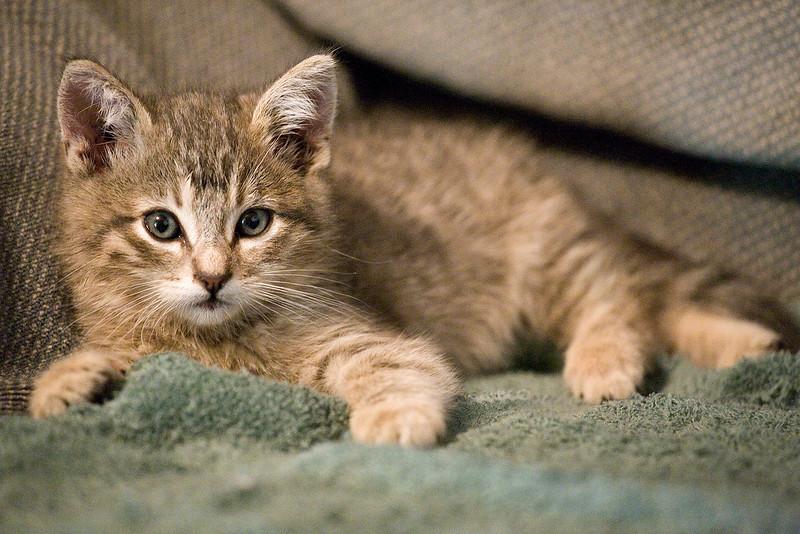 new-kitten-111319-02.jpg