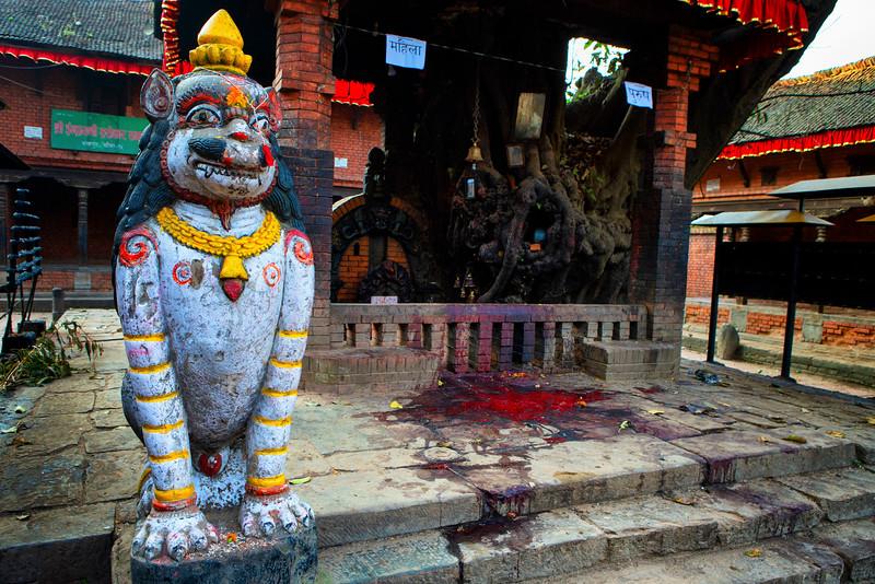 Site of a water buffalo sacrifice. Bhaktapur, Nepal