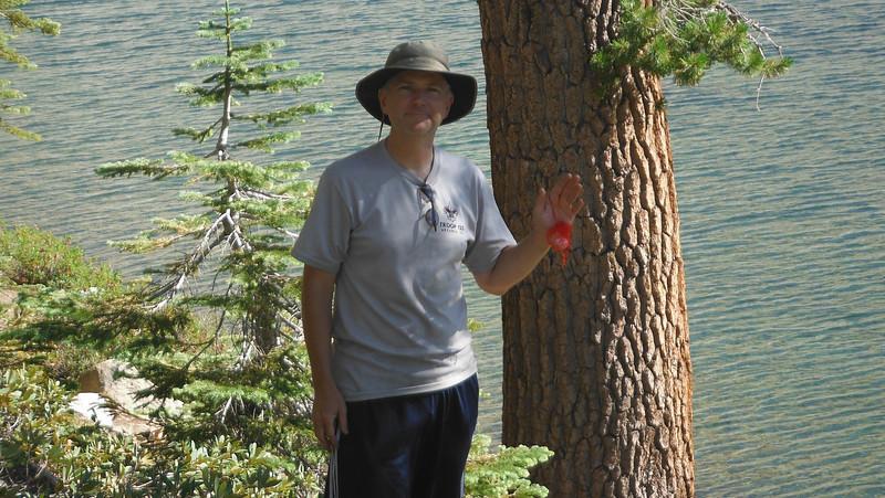 sequoia 100.JPG
