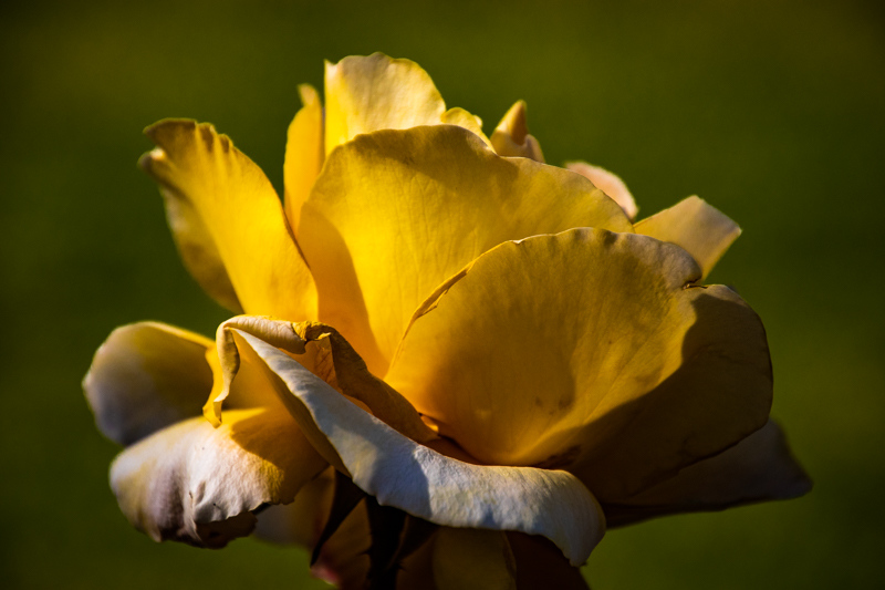 April 13 - Yellow and green.jpg